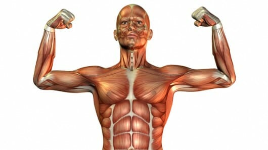 strongest anabolic steroid